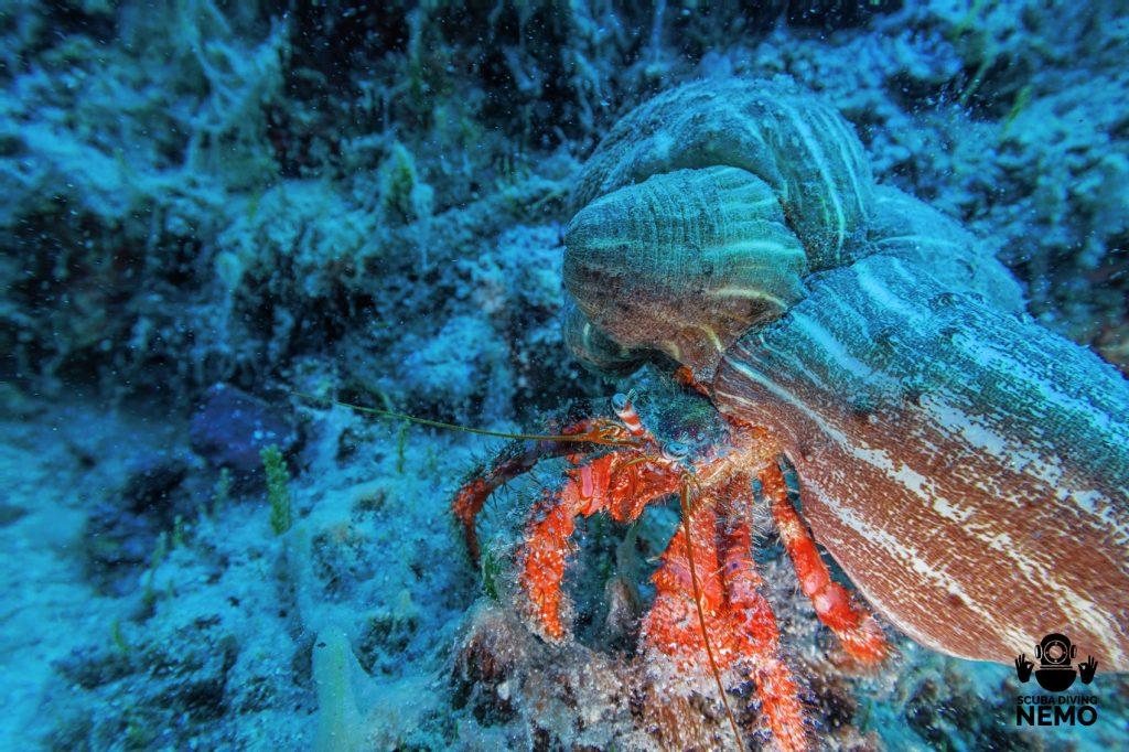 Подводни снимнки, дайвинг център Халкидики-Немо